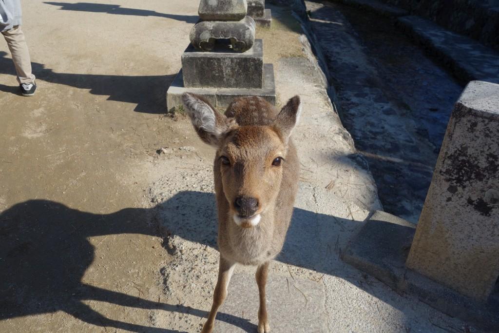 つぶらな瞳で小鹿におねだりされる