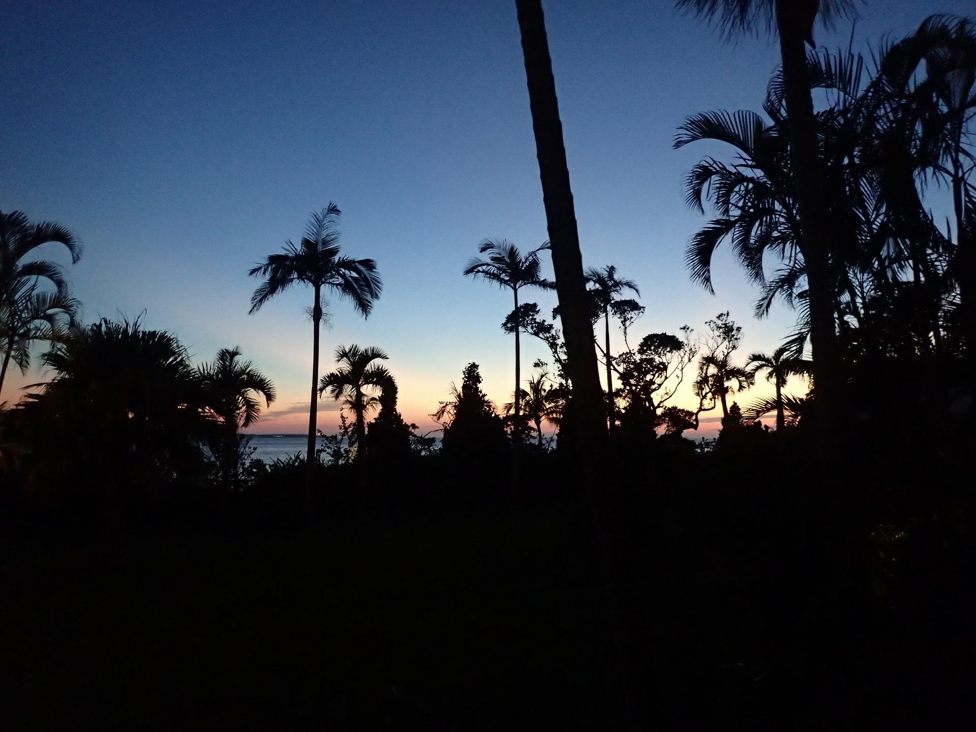 南国の夕日を向かいにヤシの木のシルエット