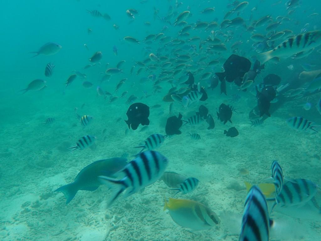 沖縄の海の中で泳ぐ魚たちを追いかける