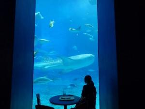 圧倒される巨大なジンベイザメを眺める女性のシルエット