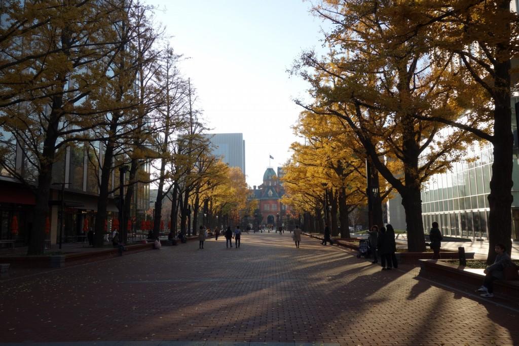 北海道庁前の紅葉と並木大通り