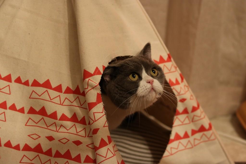 小屋から「お呼びでしょうか?」ネコ