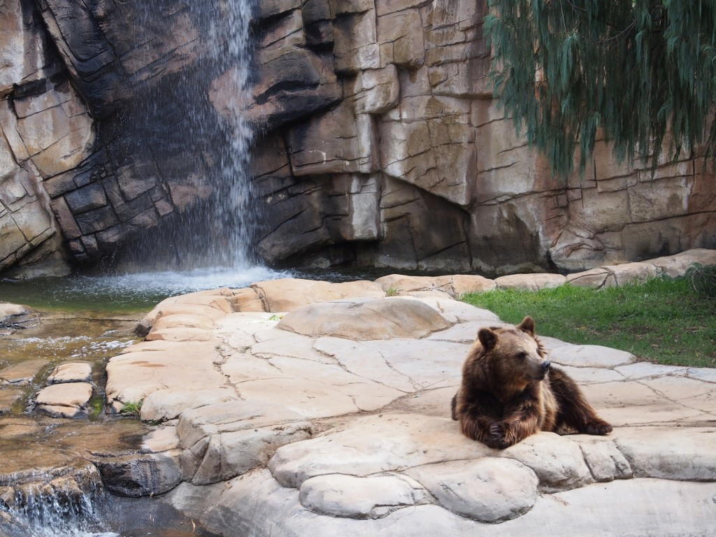 リラックスする熊、名付けて「リラ熊」