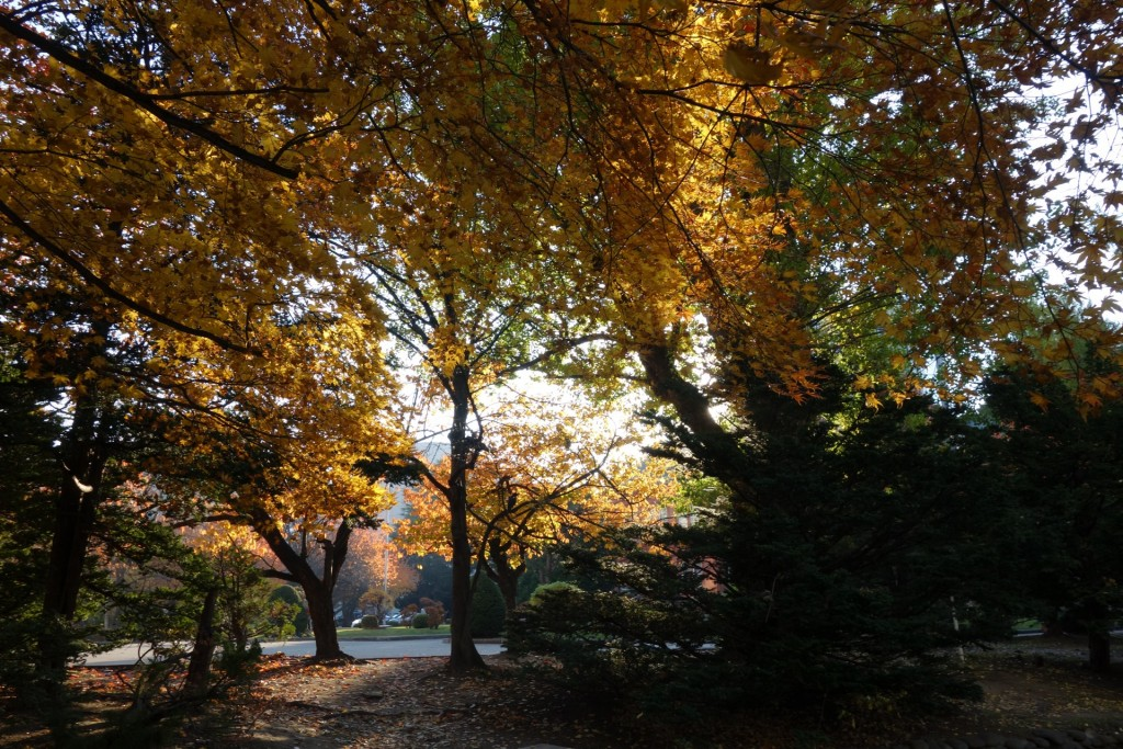 紅葉に差し込む日の光
