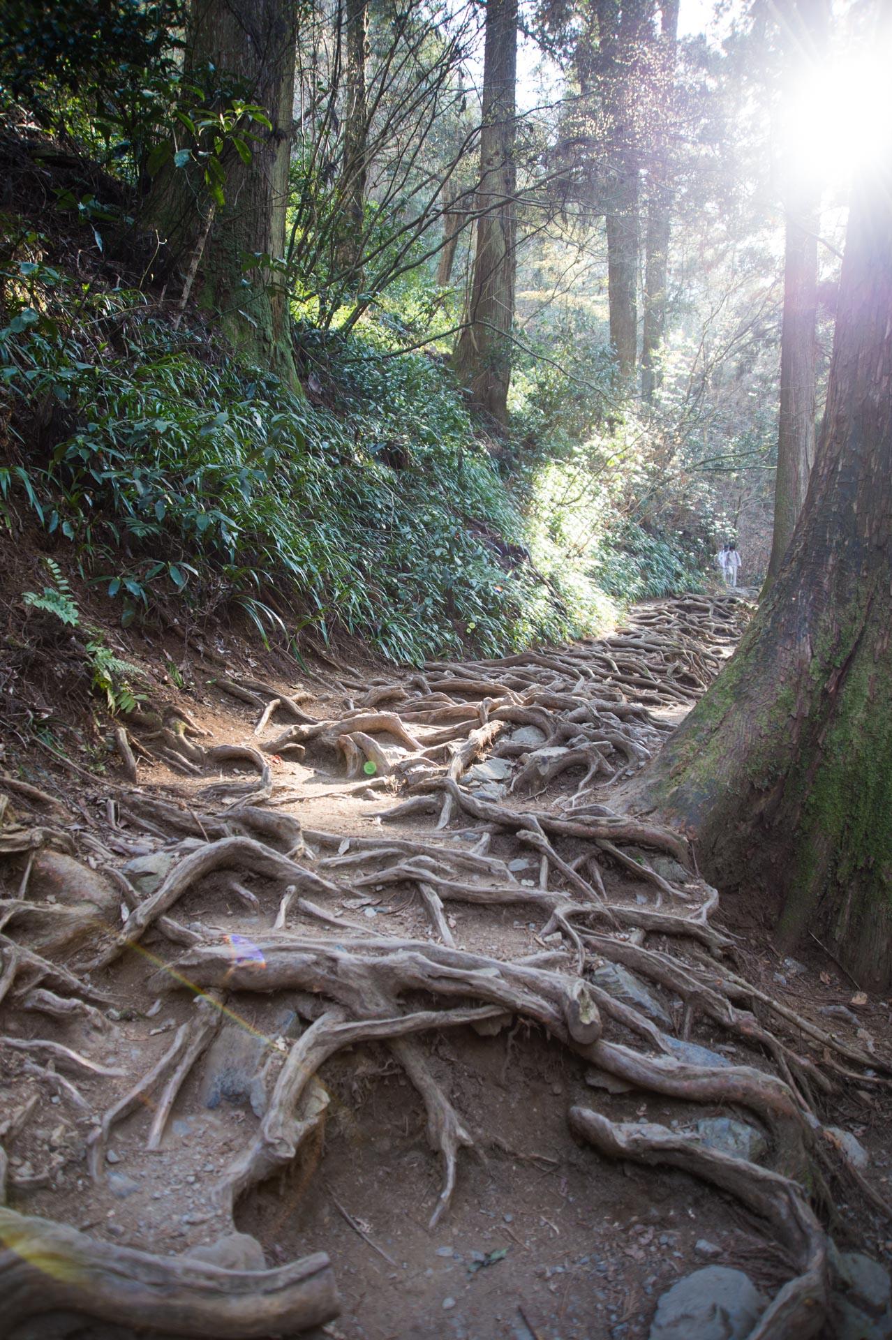 木漏れ日と木の根っこのいばらな道