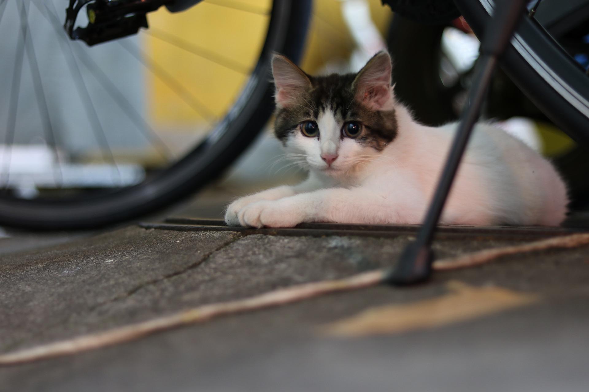 自転車の隙間からこっちを見る野良ネコ
