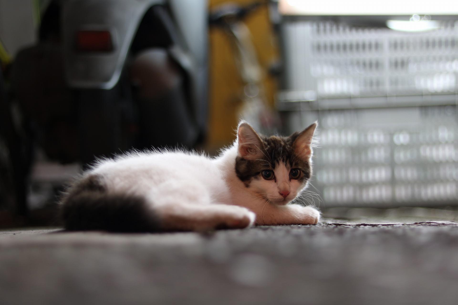 夜道でくつろぐ野良猫