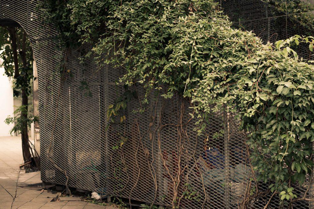 膨張してフェンスを壊す木の生命力