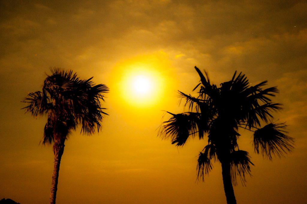 南国のヤシの木と太陽