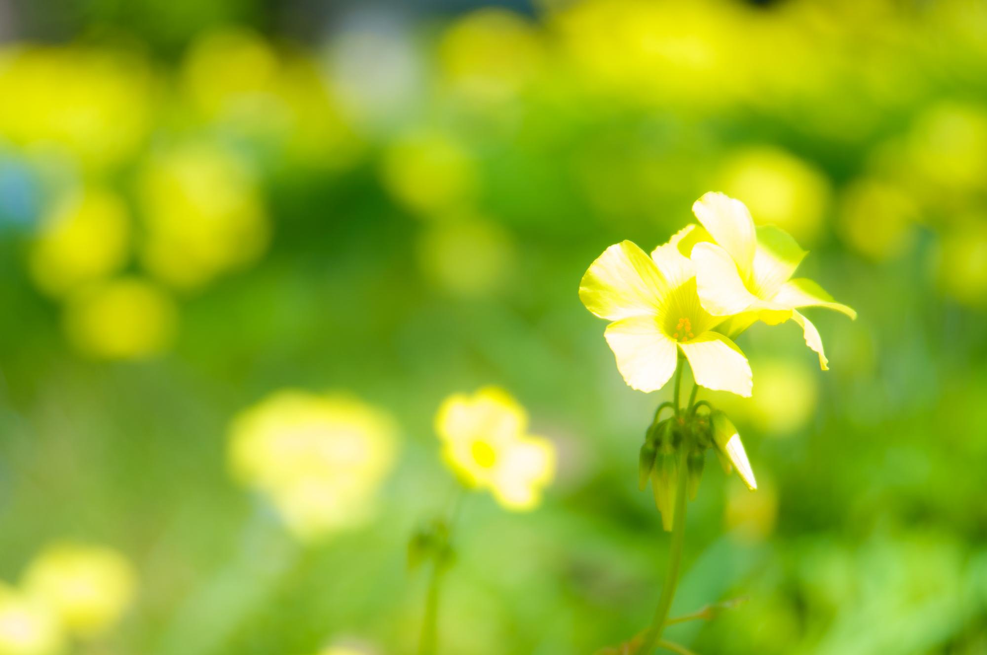 日向ぼっこを花畑で