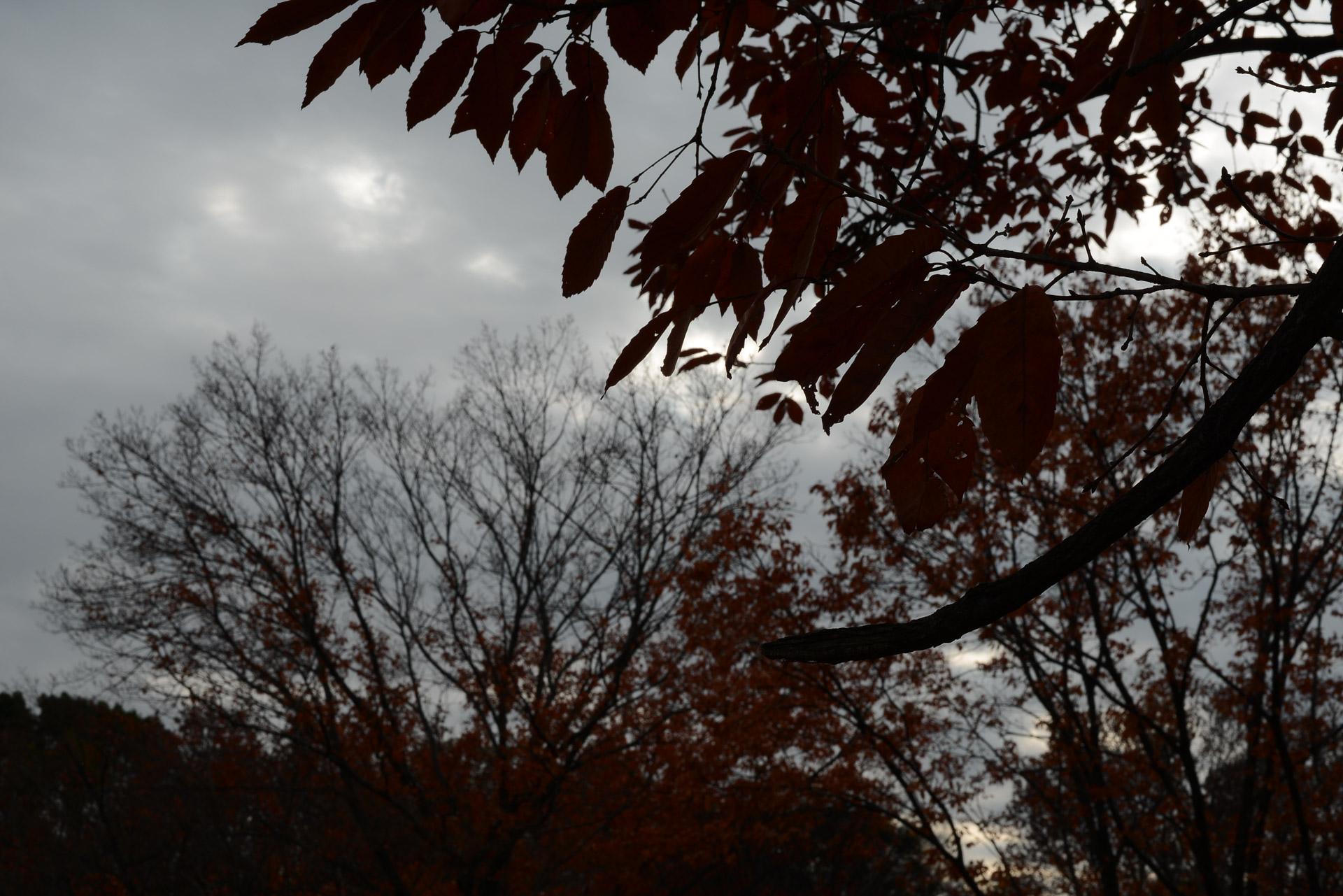 木枯らしと木漏れ日によるシルエット