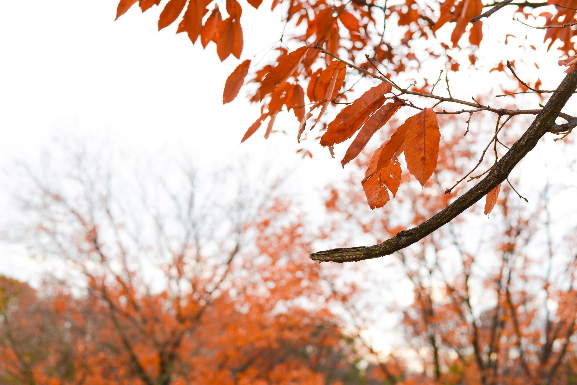 木が葉を枯らしながらも彩りを残す