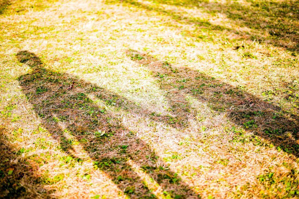 手をつなぎ芝生に映した影
