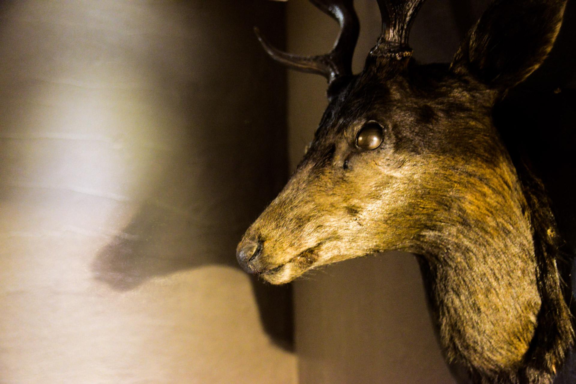 インテリア化された鹿の剥製