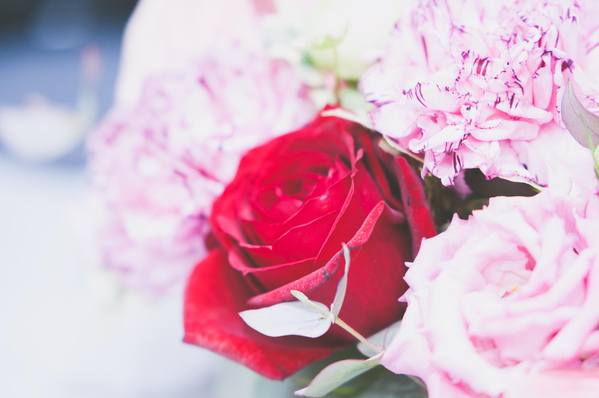 赤とピンクの薔薇