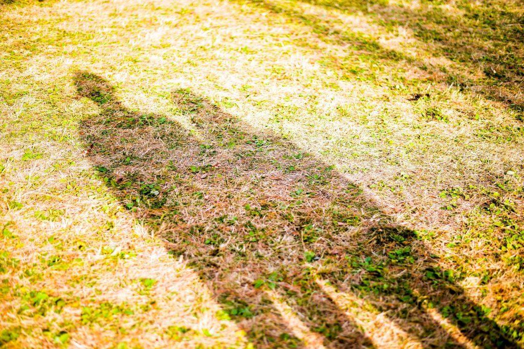 芝生に寄り添う影