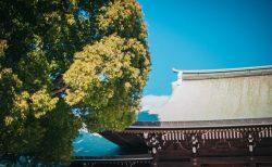 明治神宮から見える晴天