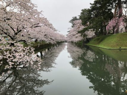 弘前公園の満開の桜