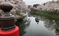 桜に囲まれた川を渡る船