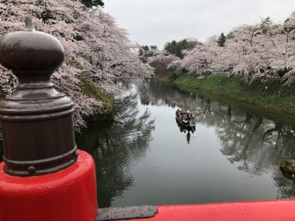 桜に囲まれた川を渡る船