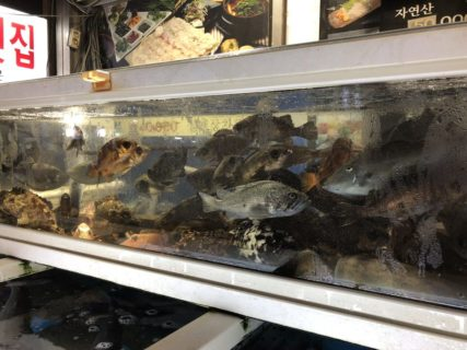 屋台の生簀に泳ぐ魚介