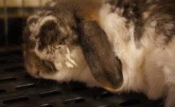 居眠りウサギ